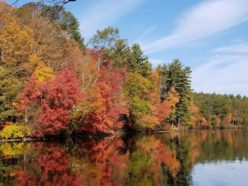 Foliage in fall