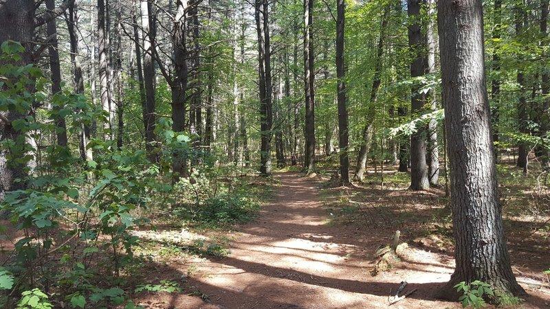 Backpacker Trail