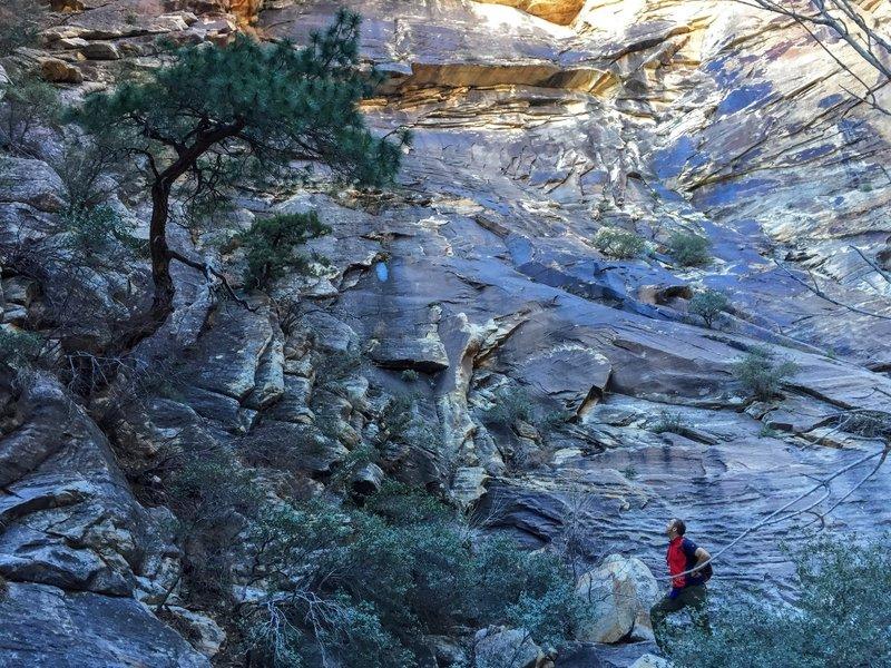 Bonsai pine on the trail