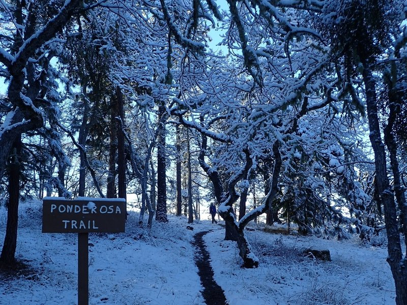 The lower end of the Ponderosa Trail in winter (there old handmade trail signs are being replaced).