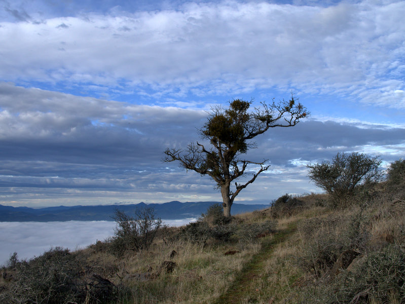View west from the Manzanita Trail