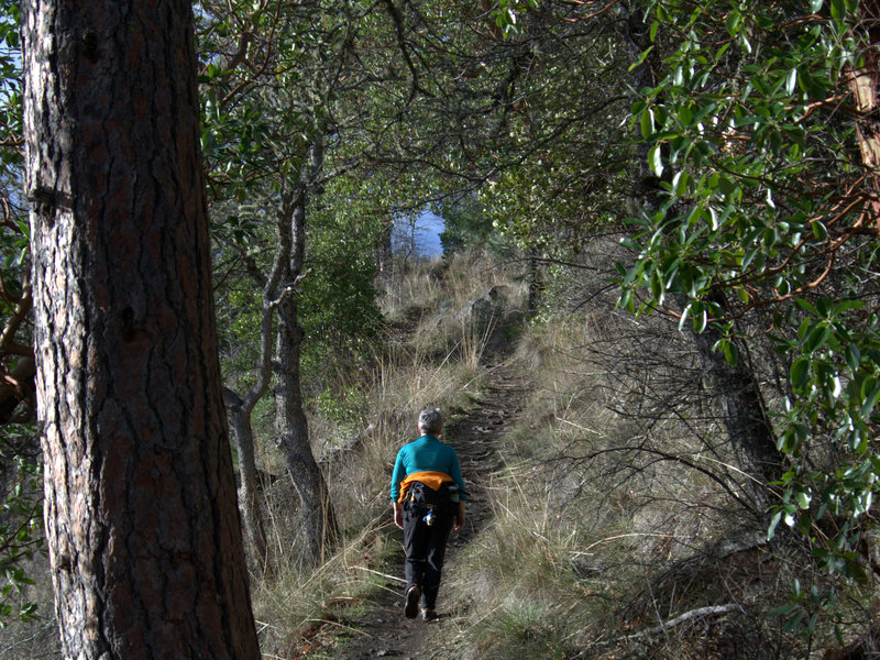 Nearing the upper end of the Manzanita Trail