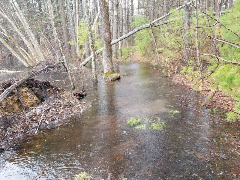 Duck pond trail (wading required)