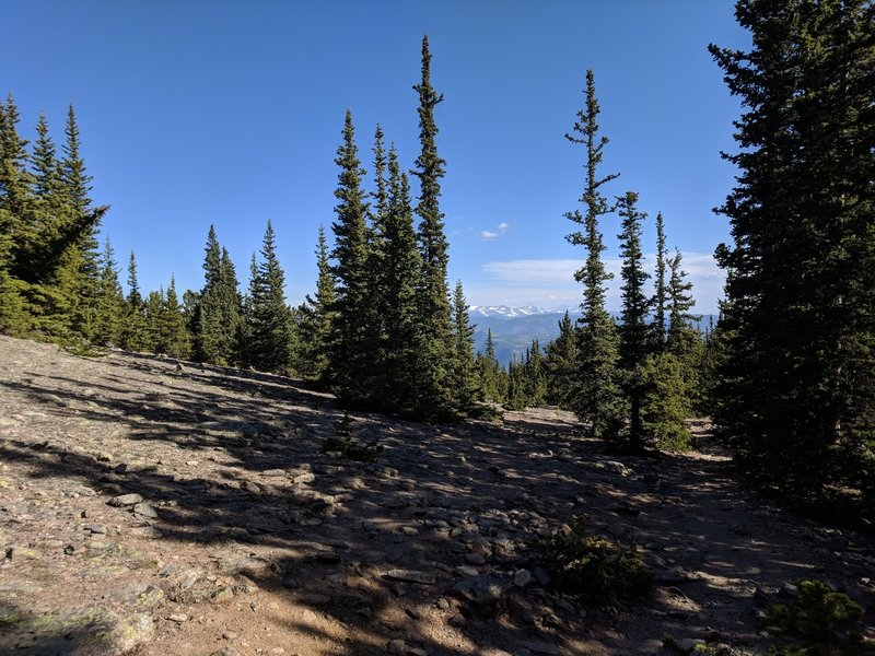 View north from the trail