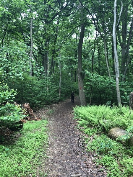 Typical trail conditions along the Oak Loop Trail