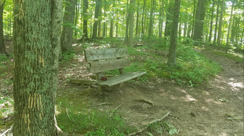 The only bench on Old Forest Trail