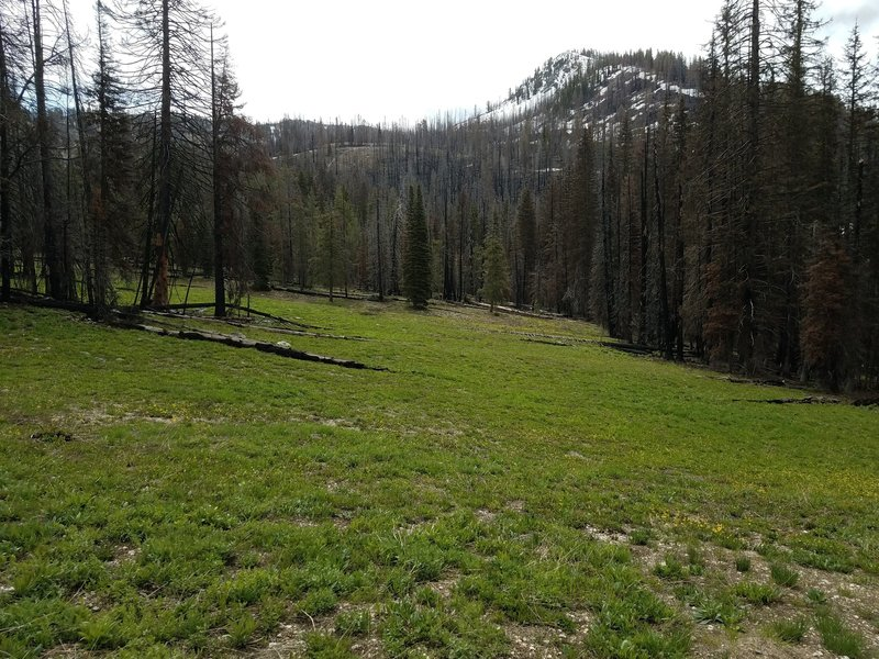 Regrowth meadow near Jennnie Lake