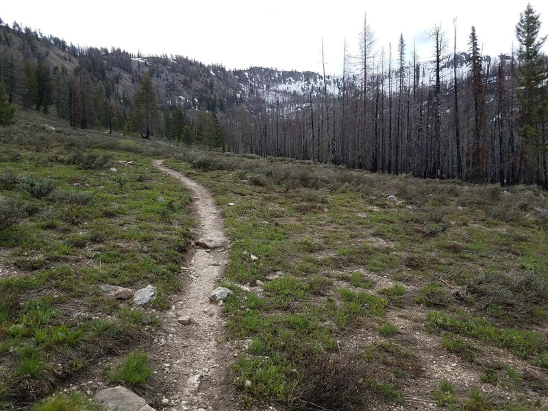 View of trail nearing summit of Jennie Lake Trail.