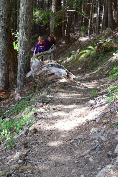 Most of the trail is a version of this.