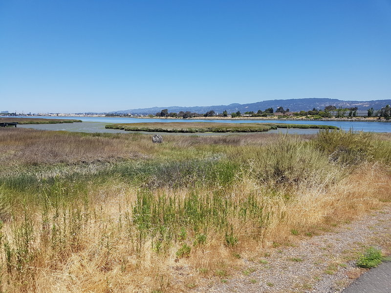 Marsh and San Leandro Bay