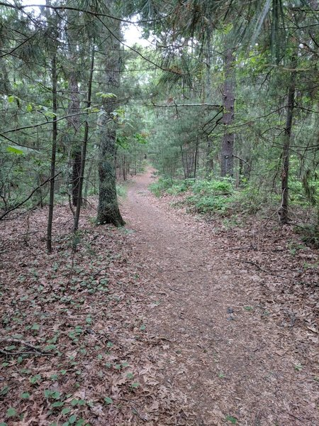 Smooth trail on Strawberry Hill Trail