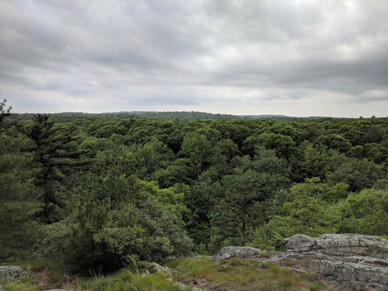 View of Noanet Woodlands from Nimrod Rock