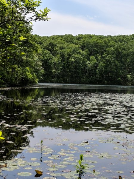 Noanet Pond