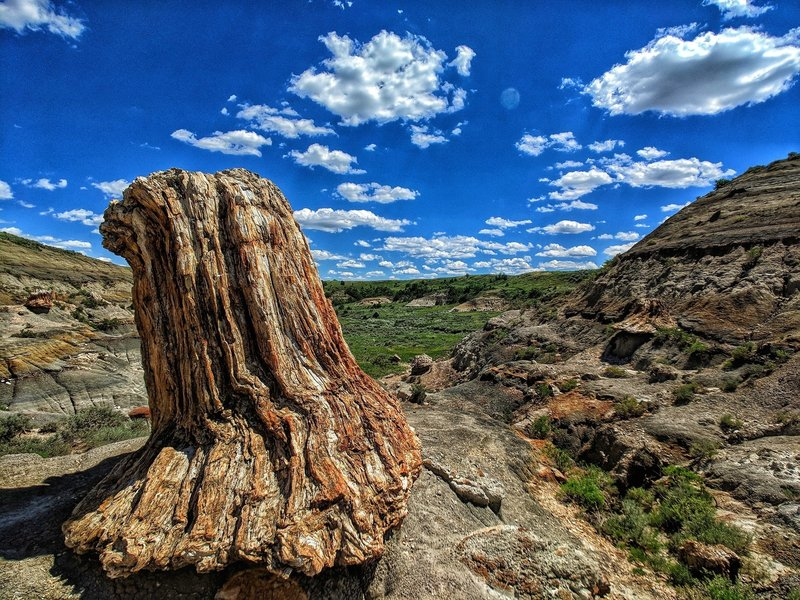 6ft petrified stump located on the North Petrified Forest Trail.