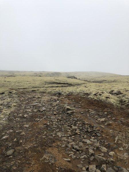Trail running through a field of moss