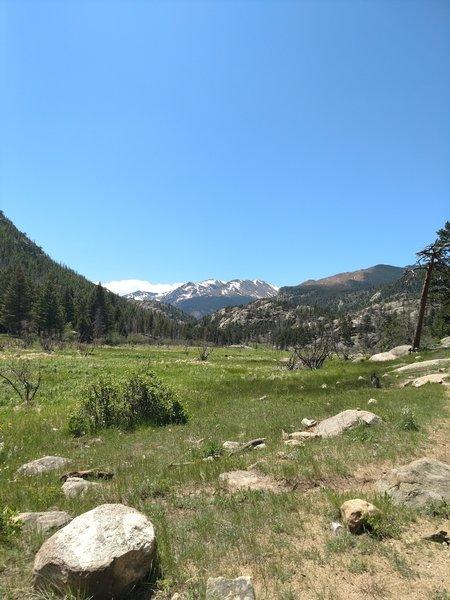 Meadow overlook