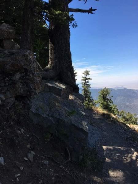 Tree growing from rock, looking southwest