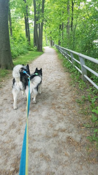 Devil's Hole Trail, well maintained, dog friendly!