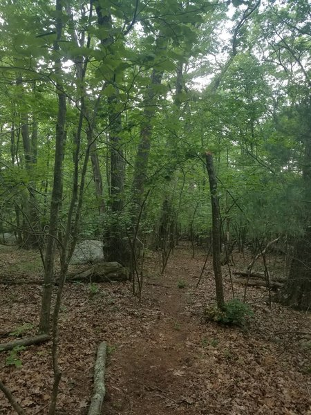 Saddle Hill - a lot of trail hidden in a suburban neighborhood.