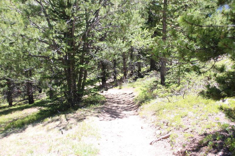 Watrous Gulch Trail