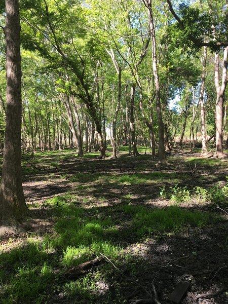 Dry swamp view