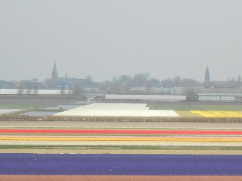 Tulip fields near Lisse