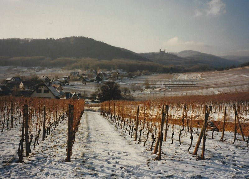 Vineyards and castle in the winter.