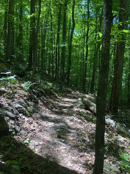 Northern side of the Bald Mountain Trail loop.