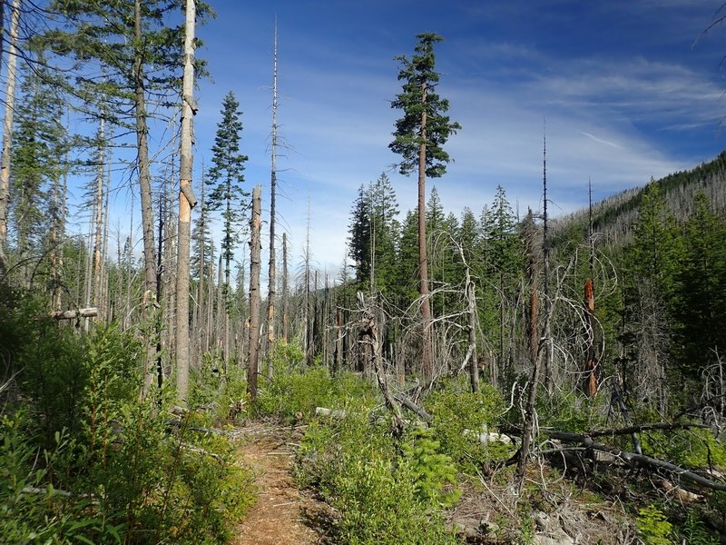 The Middle Fork Trail within the area of the 2008 fire