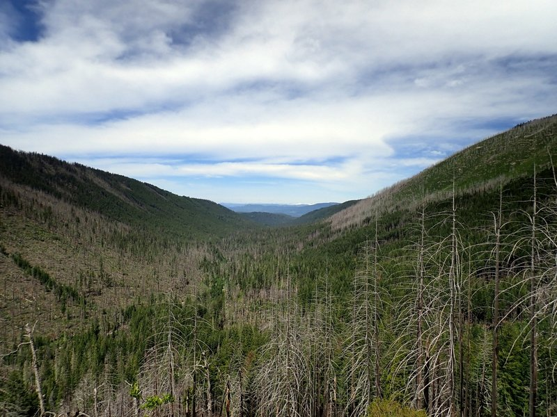 Looking west along the Middle Fork Canyon from the Halifax Trail.