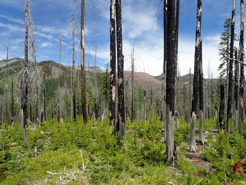 Fire damage and new growth along the Halifax Trail