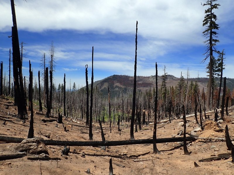 The McKie Camp Trail passes through damage from the 2017 Blanket Creek Fire.