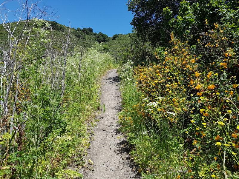 Wildflowers on the way up to Wildcat Peak