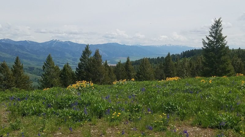Lots of nice wildflowers with nice views.