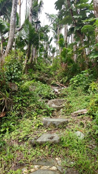The staircase section at the top of the trail.