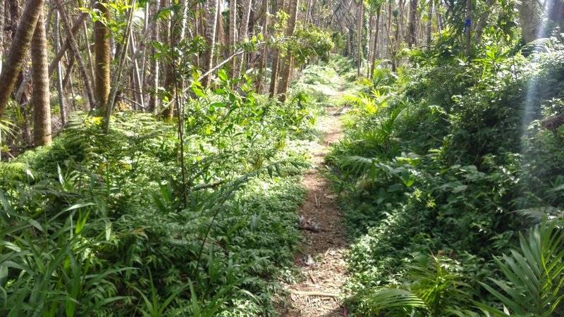 A typical section of the trail.