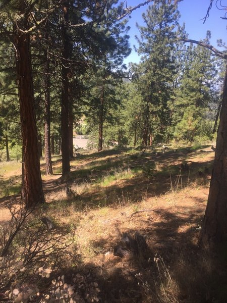 Stop # 1, Example of Resilient Pines in Wildland Urban Interface