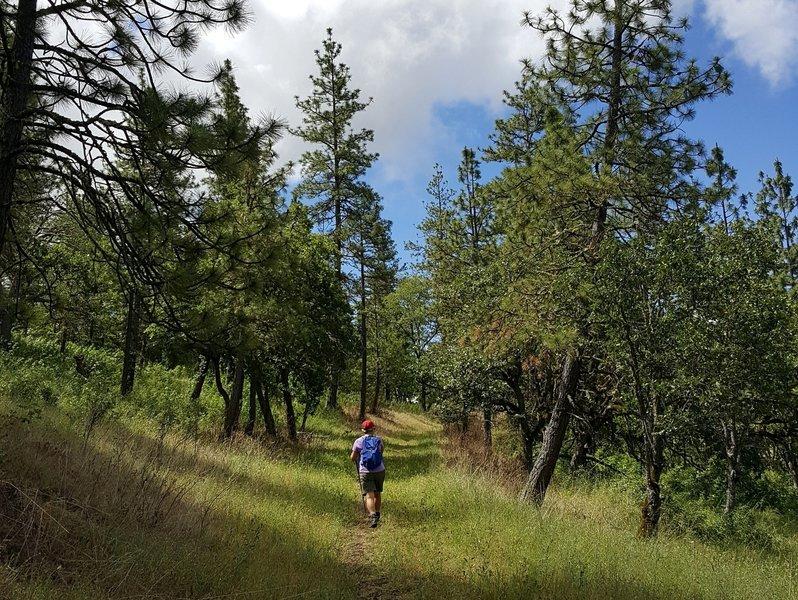 Along the Deer Trail
