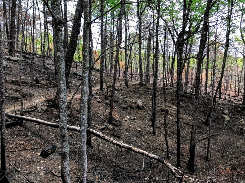 The bald forest reflects the recent fire