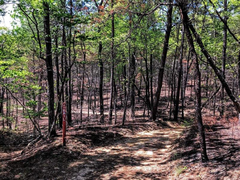 Old fire road rolling through the forest