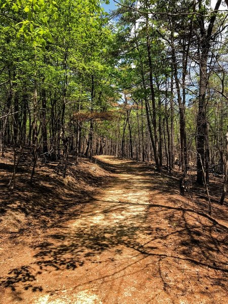 Wide open trail on Stone Place