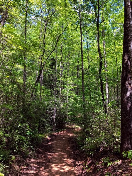 Thick forest along the trail