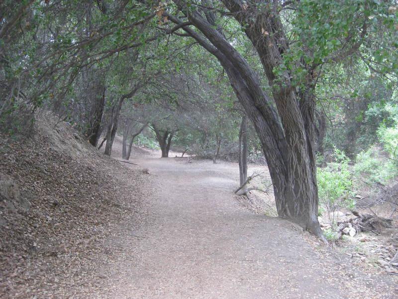 Lovely shaded oak segment.