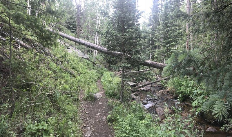 Lush stream side trail