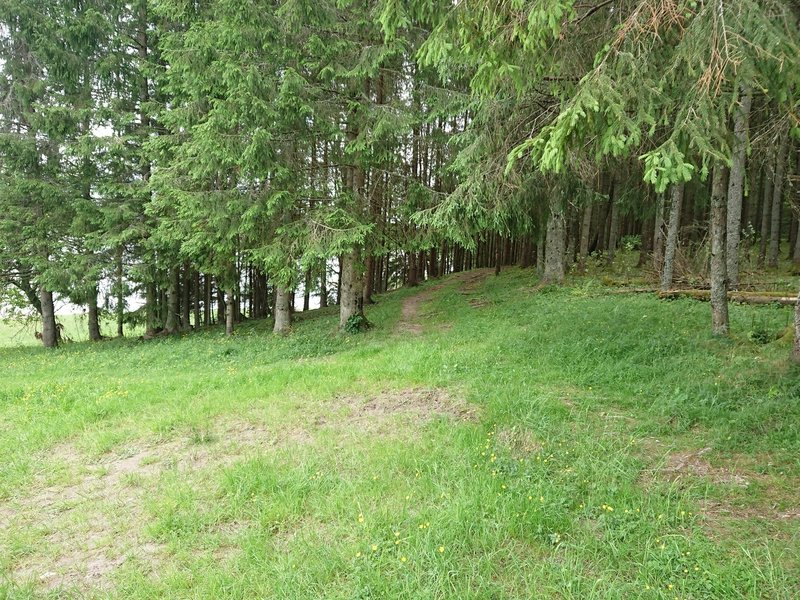 Path exit/entry near Picnic table