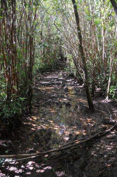 The trail can be exceedingly muddy, which unfortunately detracts from what could be great hike