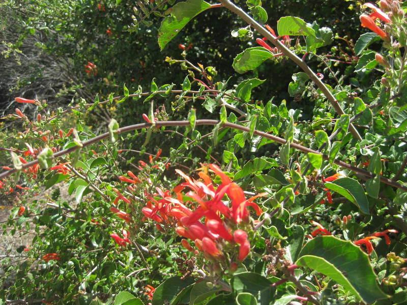 iNaturalist tells me these are genus Keckiella.
