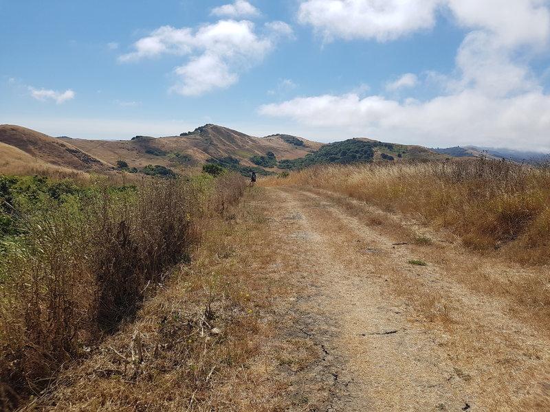 Golden Hills of California