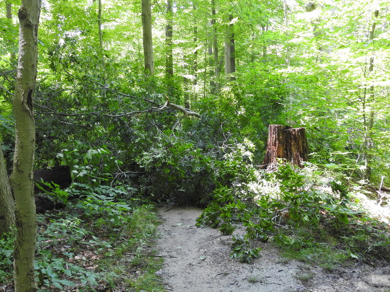 Forest Point Trail is blocked on the more northern fork of this loop trail necessitating a return to start.