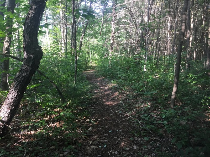 Typical section of the Whitney Brook Trail